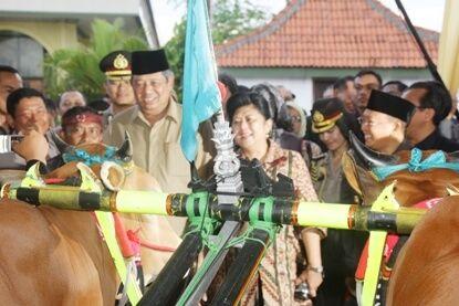 SBY melihat langsung profil sapi kerap